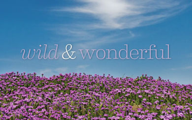 Wild and Wonderful!