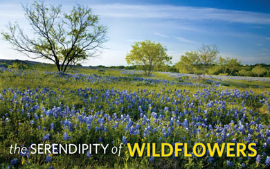 the serendipity of wildflowers
